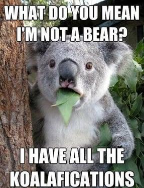 Not-a-bear.jpg