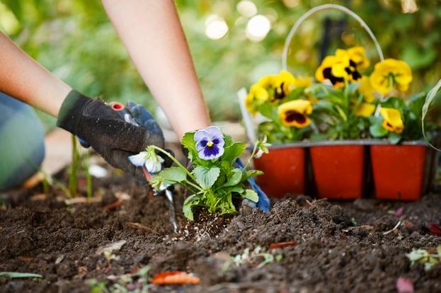 hands-planting-flowers-in-garden